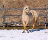 D80 Horses