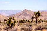 Near Red Rock Canyon