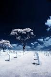 2007-01-13 American War Memorial 31124.jpg