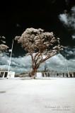 2007-01-13 American War Memorial 31150.jpg