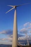 Bangui windmills 02031.jpg