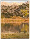 Marsh Loop, Bosque del Apache National Wildlife Refuge