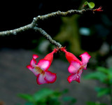 Oklahoma City - Myriad botanical gardens