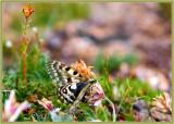 019-Butterfly.jpg