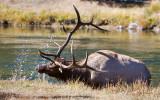 029-Elk.jpg