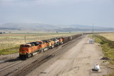 WB at Newcastle, Wy