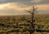 Petrified forest, Arizona