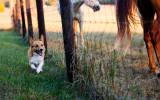 Harley on the Farm