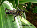 Insects and small critters