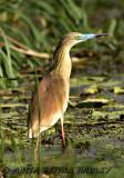 Birds of Africa 2007