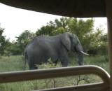 Kruger:  one big guy!