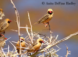 Birds of Africa 2006