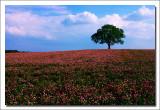 Landscape, Ontario, '07