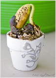 love sprouting all over!