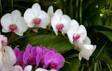 NY Botanical Garden Orchid Show-2007