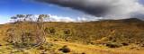 Willow Spring Station Flinders Range S.Aust.jpg