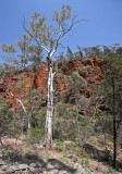 Alligator Gorge Flinders Ranges South Australia.jpg