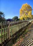 Autumn Pickett Fence.jpg