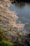 The sakura patels are saying goodbye to the river