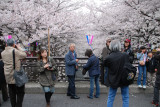 Posing for photos with Sakura is one of of the main features of celebrations