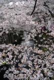 I always loved the Sakura scene