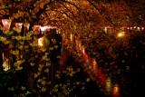 Sakura has its beauty by night too