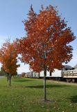 fall foliage along the rails...