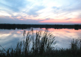 cattails in the sunset...