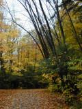 fall path...