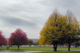 perfect fall trees...
