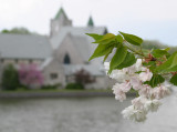 blossoms again...