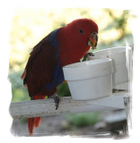 hungry parrot...