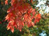 Mon automne 2006