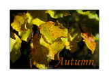 Autumn on two weels