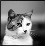 Hasselblad Cat