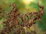 green brown