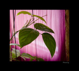 Green Leaves With Pink Background