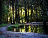The Fairies' Pond 29