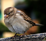 And the proud little sparrow said....