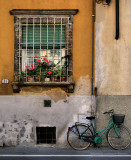 Imprisoned flowers & free bicycle