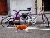Cats have not any liking for tandems...