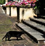 Mighty Cat 1
