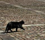 Mighty Cat  2