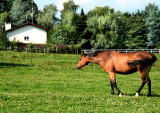 Curious Horse 1