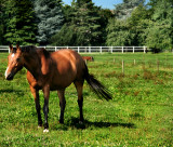 Curious Horse 2