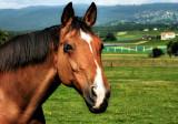 Curious Horse 3