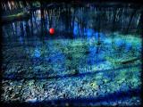 The Fairies' Pond 8