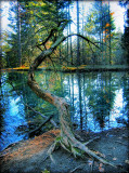 The Fairies' Pond 7