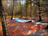 The Fairies' Pond 4