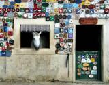 Pampered Horse 2